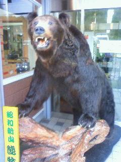 剥製のヒグマ